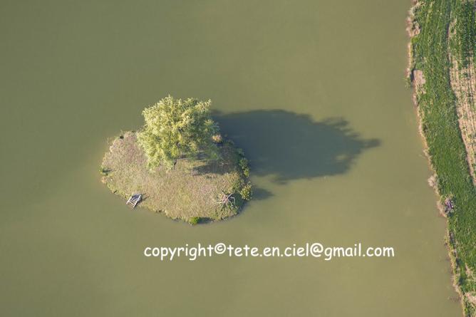 L'arbre Robinson