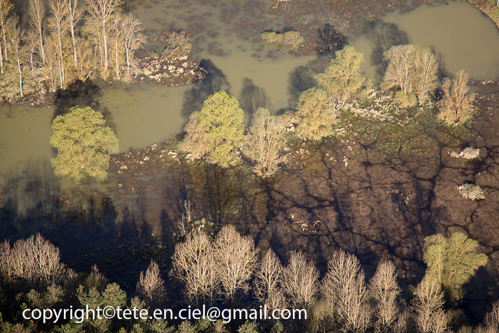 Mangrove gersoise